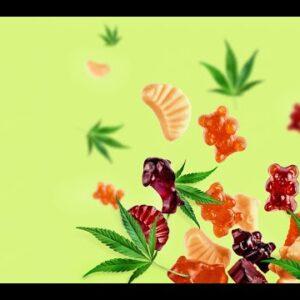 CBD Gummies Dr Oz (True REVIEW!)